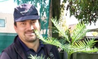 HLD_Jacek with the Wollemi Pine